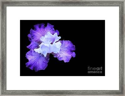 190 Framed Print