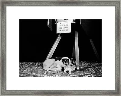 1930s 1940s Wire Fox Terrier Dog Lying Framed Print