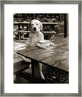 1930s Dog Mixed Breed Sitting Like Framed Print