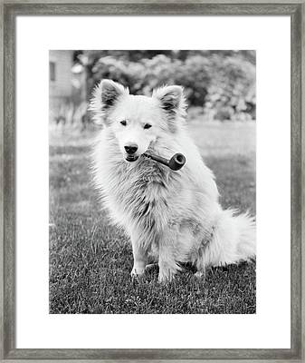 1930s Mongrel Dog Sitting Framed Print