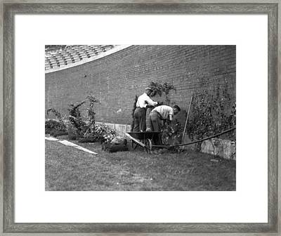 1937 Planting Of The Ivy At Wrigley Field Framed Print by Retro Images Archive