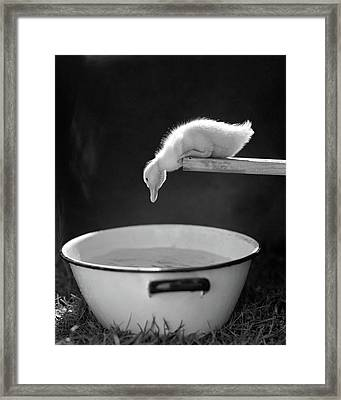 1940s 1950s Young Duck Leaning Framed Print