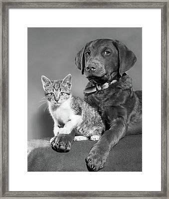 1950s Portrait Of Lab Mix Dog Lying Framed Print