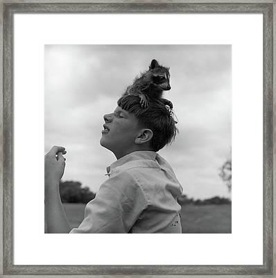 1950s Raccoon Sitting On Boys Head Framed Print