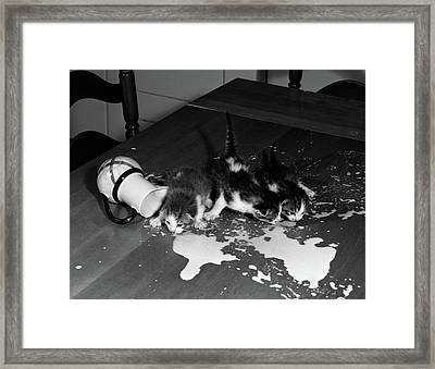 1950s Three Kittens On Table Top Framed Print