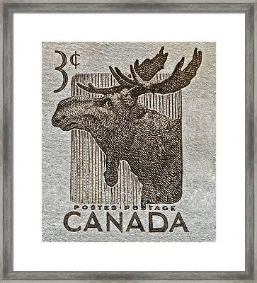 1953 Canada Moose Stamp Framed Print