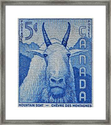 1956 Canada Mountain Goat Stamp Framed Print
