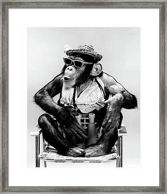 1960s Chimp Sitting In Lawn Chair Framed Print