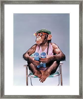 1960s Chimpanzee With Binoculars Straw Framed Print
