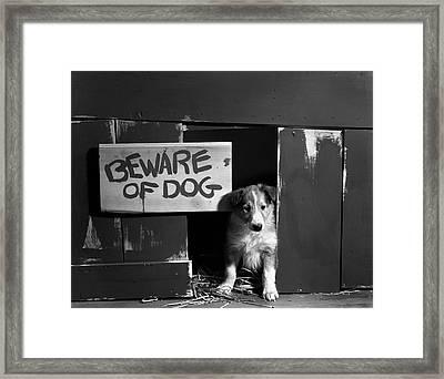 1960s Collie Dog Puppy Sitting In Door Framed Print