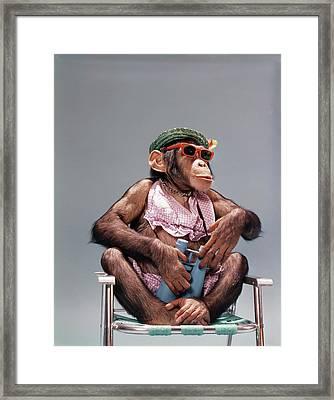 1960s Female Chimpanzee Wearing Summer Framed Print