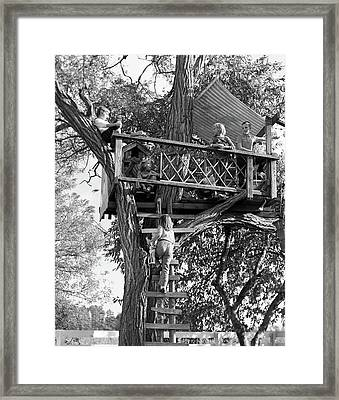 1960s Kids Playing In Tree House Framed Print