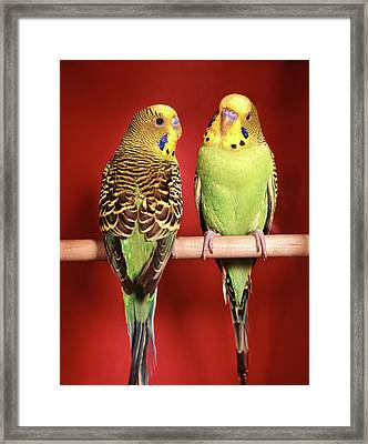 1960s Pair Of Two Yellow Green Framed Print