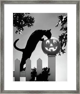 1970s Black Cat And Jack-o-lantern Framed Print