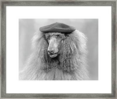1970s French Poodle Wearing Beret Framed Print