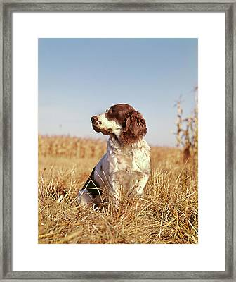 1970s Hunting Dog In Autumn Field Framed Print