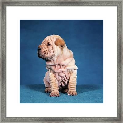 1990s Chinese Shar Pei Puppy Dog Sitting Framed Print