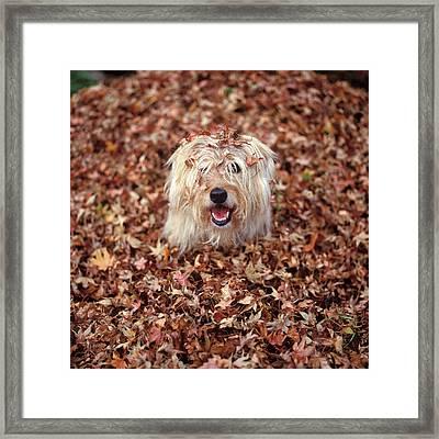 1990s Dog Covered In Leaves Framed Print