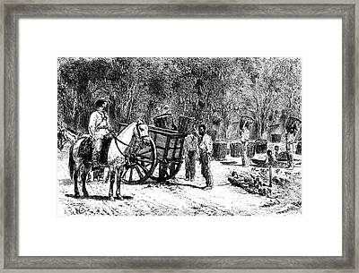 19th Century Coffee Farming Framed Print by Collection Abecasis