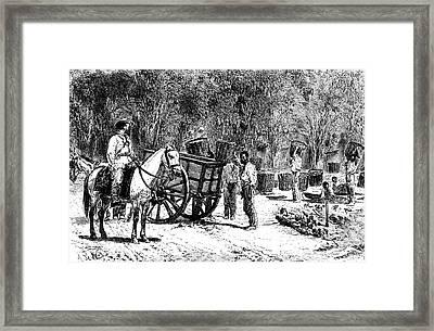 19th Century Coffee Farming Framed Print