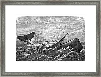 19th Century Whale Hunt Framed Print
