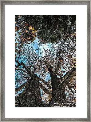 1st Tree Framed Print by Gandz Photography