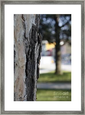 2-3 Framed Print by Donato Iannuzzi