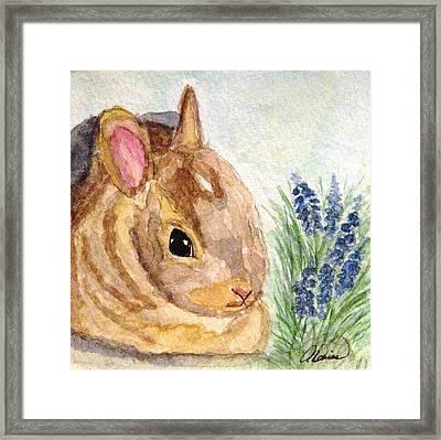 A Baby Bunny Framed Print by Angela Davies