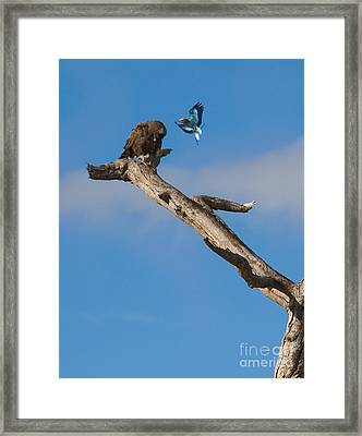 A Confrontation Framed Print