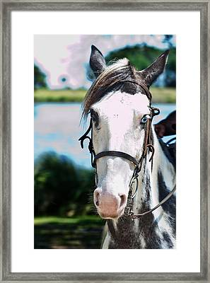 A Horse Is A Horse Of Course Framed Print by Frank Feliciano