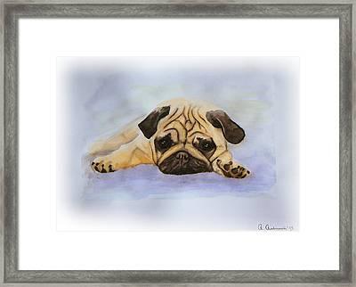 A Little Bulldog Framed Print by Anna Androsovski