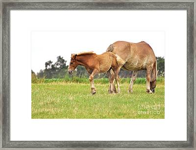 A Mare And Her Colt Framed Print by Penny Neimiller