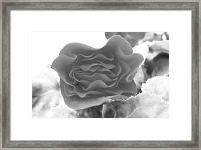 A Rose Framed Print by Mavis Reid Nugent