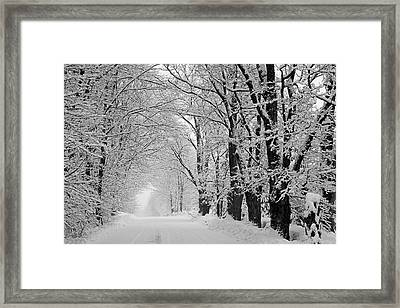 A Snow Covered Road Lined With Leafless Framed Print