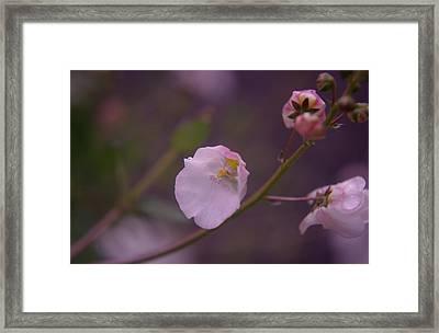 A Soft Flower Framed Print by Jeff Swan
