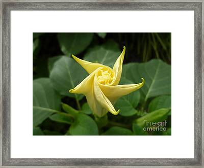 A Star Is Born 001 Framed Print