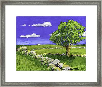 Tree In Maine Blueberry Field Framed Print by Keith Webber Jr