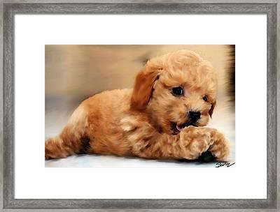 Acrylic Poodle Framed Print by Shere Crossman