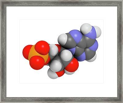 Adenosine Monophosphate Molecule Framed Print by Molekuul