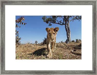 Africa, Botswana, Chobe National Park Framed Print