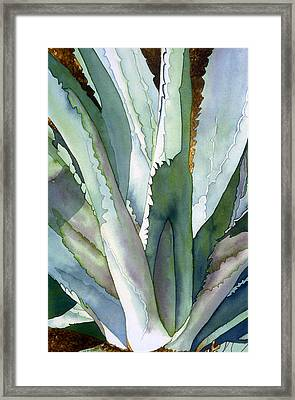 Agave 1 Framed Print by Eunice Olson