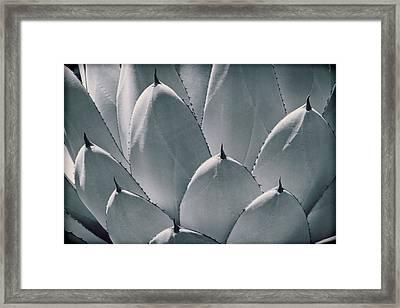Agave Leaves Framed Print by Kelley King