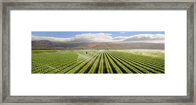Agriculture - A Mature Green Leaf Framed Print by Timothy Hearsum
