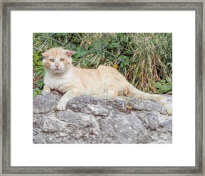 Moody Alley Cat Framed Print