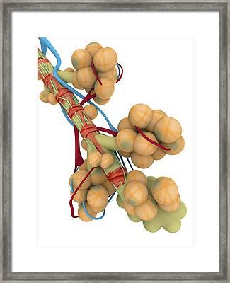 Alveoli Framed Print by Alfred Pasieka