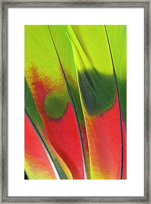 Amazon Parrot Tail Feather Design Framed Print