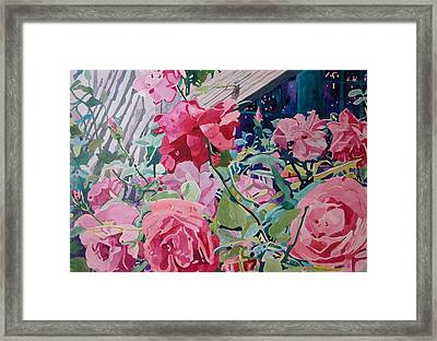 American Beauty Framed Print by Terry Holliday