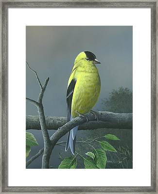 Framed Print featuring the painting American Goldfinch by Mike Brown