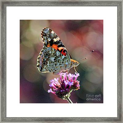 American Painted Lady Butterfly Square Framed Print