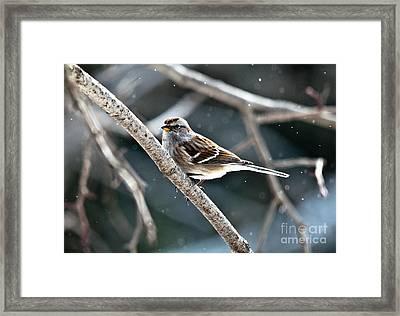 American Tree Sparrow Framed Print